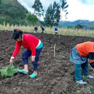 En la siembra de la quinua, las mujeres de la asociación de mujeres de los Páramos.